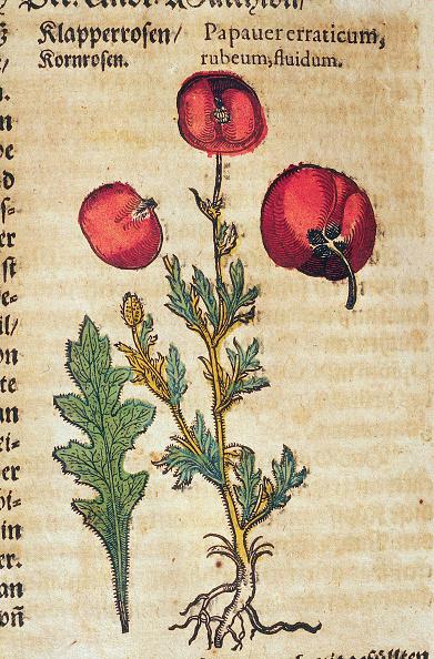 Print Collector「Wild Poppy」:写真・画像(3)[壁紙.com]