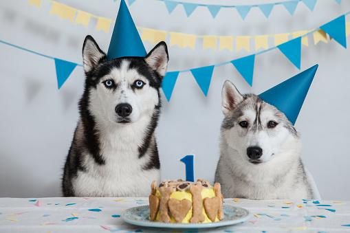 縁なし帽子「犬の誕生日」:スマホ壁紙(3)