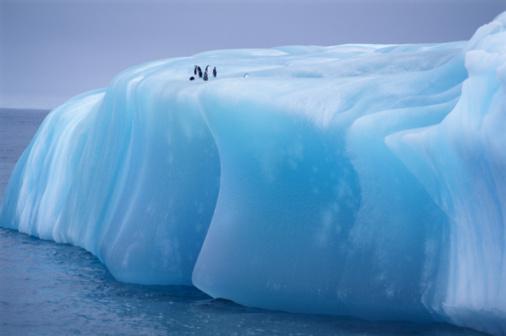 Weddell Sea「Antarctica, Weddell Sea, chinstrap penguins resting on blue iceberg」:スマホ壁紙(14)