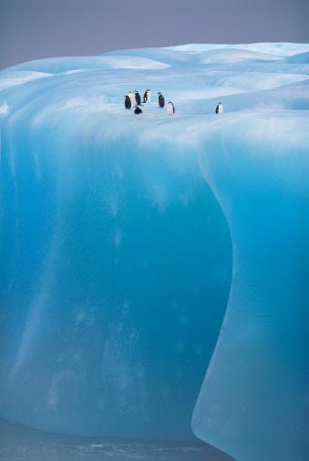 Weddell Sea「Antarctica, Weddell Sea, chinstrap penguins resting on blue iceberg」:スマホ壁紙(12)