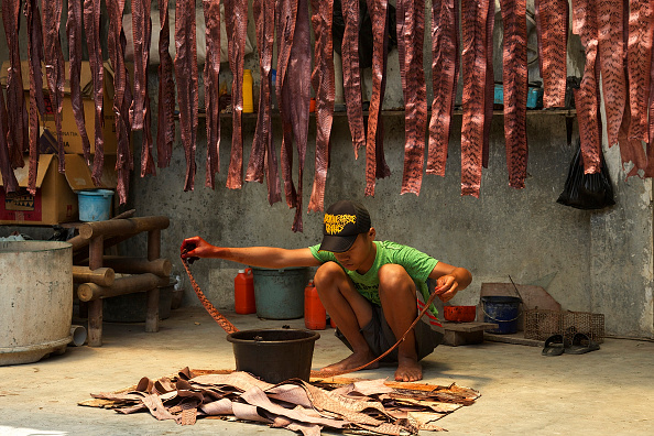 Wallet「Indonesia's Snake Skin Industry」:写真・画像(8)[壁紙.com]