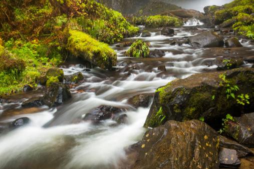 Columbia Gorge National Scenic Area「Stream in Columbia Gorge National Scenic Area」:スマホ壁紙(4)