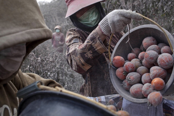 Tomato「Villagers Evacuated As Mount Sinabung Eruptions Continue」:写真・画像(14)[壁紙.com]