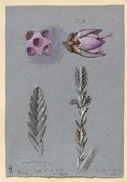葉・植物「Four Studies Of Ling」:写真・画像(5)[壁紙.com]