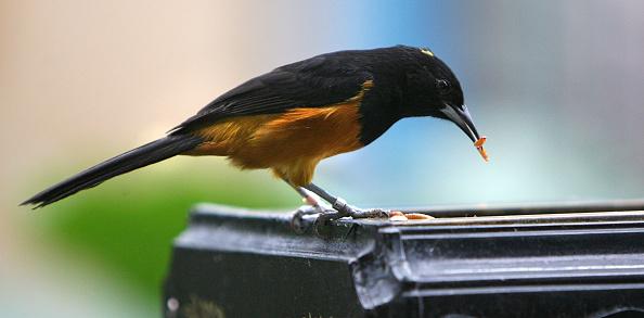 鳥「London Zoo Opens New Tropical Bird Experience」:写真・画像(3)[壁紙.com]