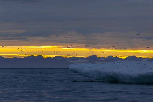 Svalbard and Jan Mayen「Midnight sun over Spitzbergen island」:スマホ壁紙(12)