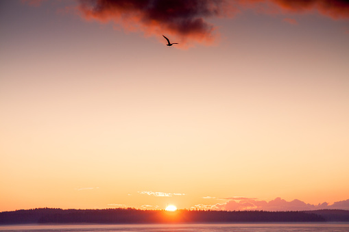 Finland「Midnight Sun Setting Against Golden Sky」:スマホ壁紙(4)