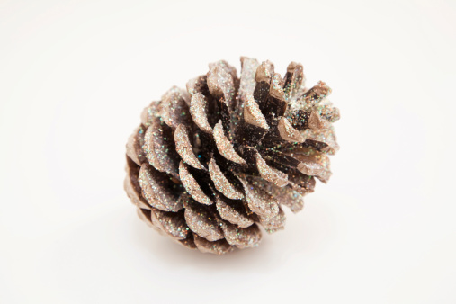 Glittering「Fir cone, close-up」:スマホ壁紙(19)