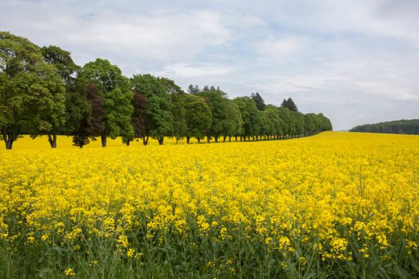 Field of flowers in rural landscape:スマホ壁紙(壁紙.com)