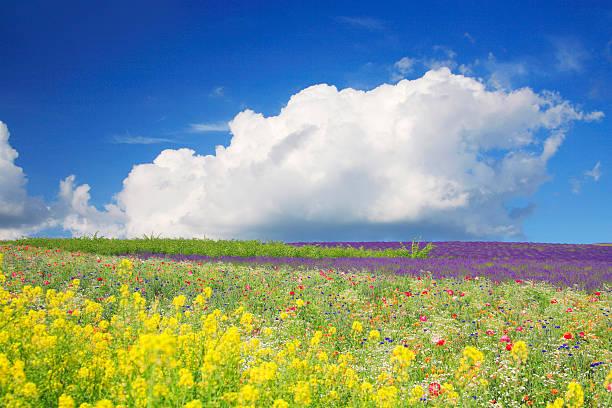 Field of flowers, Hokkaido Prefecture, Japan:スマホ壁紙(壁紙.com)