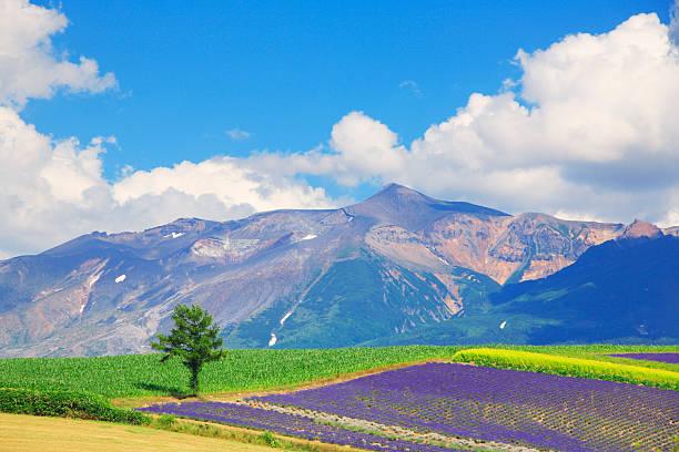 Field of flowers and Tokachi mountain range, Hokkaido Prefecture, Japan:スマホ壁紙(壁紙.com)
