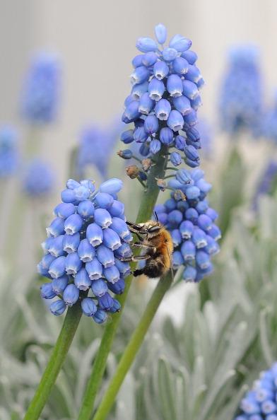 Pollination「Spring Weather Arrives In The UK」:写真・画像(3)[壁紙.com]
