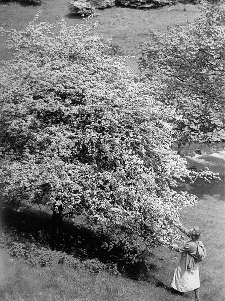 Blossom「Blooming Tree In Dovedale」:写真・画像(7)[壁紙.com]