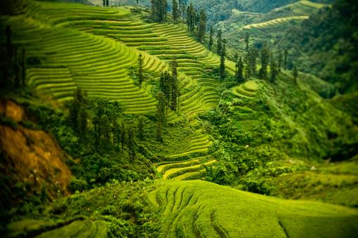 Vietnam「Terraced Fields in Northern Vietnam」:スマホ壁紙(11)