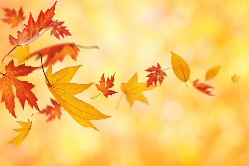 紅葉「Falling 秋の葉」:スマホ壁紙(1)