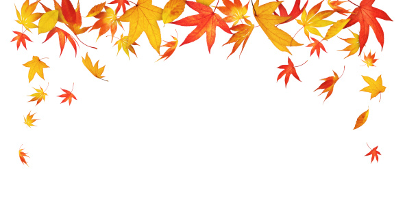 紅葉「Falling 秋の葉」:スマホ壁紙(2)