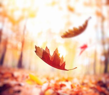季節「Falling 秋の葉」:スマホ壁紙(13)