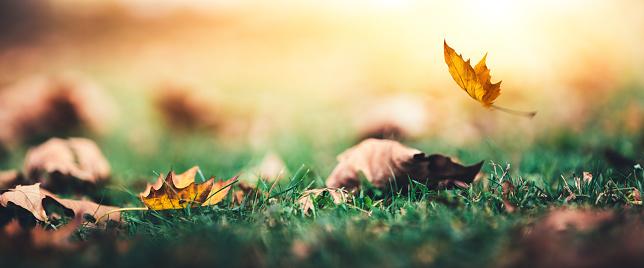 Thanksgiving「Falling 秋の葉」:スマホ壁紙(15)