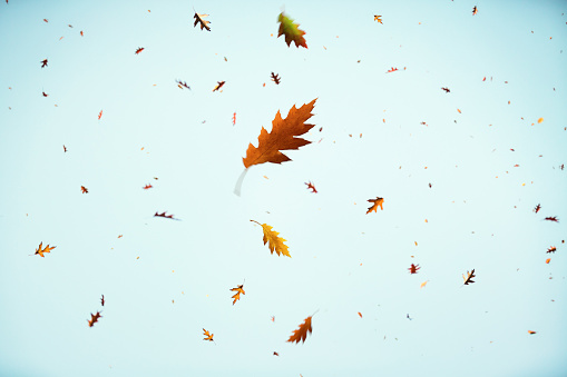 パステル「Falling 秋の葉」:スマホ壁紙(19)