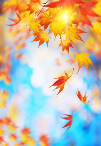 紅葉「Falling 秋の葉」:スマホ壁紙(4)