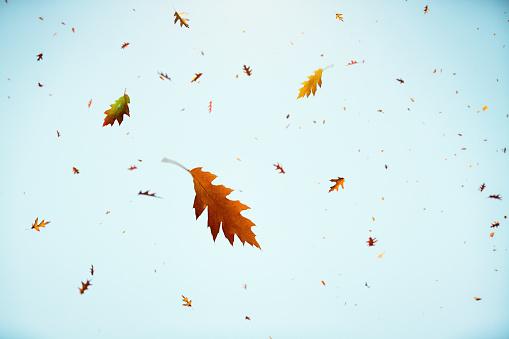 秋「Falling 秋の葉」:スマホ壁紙(18)