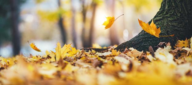 月「Falling 秋の葉」:スマホ壁紙(17)