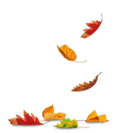 Maple「Falling Autumn Leaves」:スマホ壁紙(12)