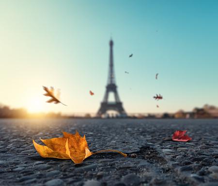 月「パリの秋の落ち葉」:スマホ壁紙(1)