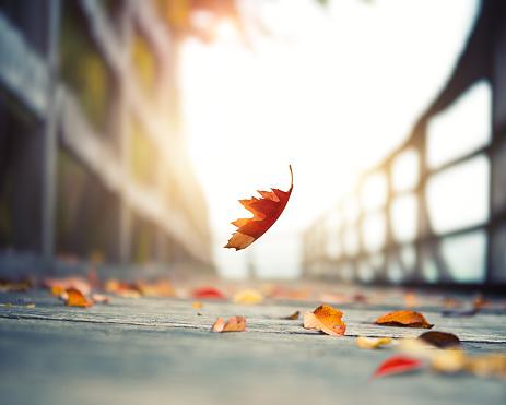 秋「Falling 秋の葉」:スマホ壁紙(1)