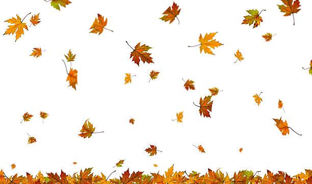 Falling autumn leaves on plain white background:スマホ壁紙(壁紙.com)