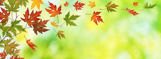 Falling 秋の葉のパノラマビュー:スマホ壁紙(壁紙.com)