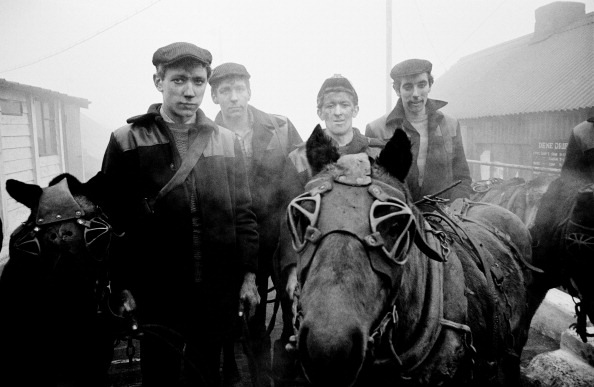 Working Animal「Miners With Pit Ponies」:写真・画像(14)[壁紙.com]