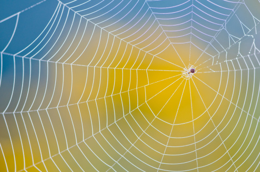 Spider Web「Neatly made spider web against blurred yellow and blue back」:スマホ壁紙(16)