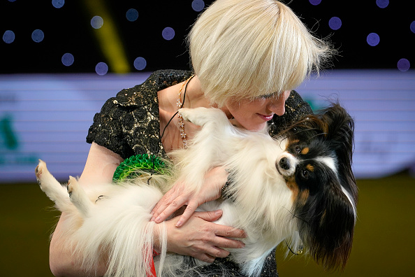 animal「Best in Show – Crufts 2019」:写真・画像(15)[壁紙.com]