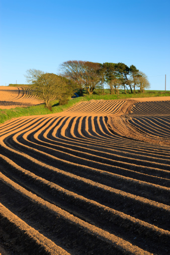 Plowed Field「Newly planted potato field furrows, Pembrokeshire」:スマホ壁紙(4)