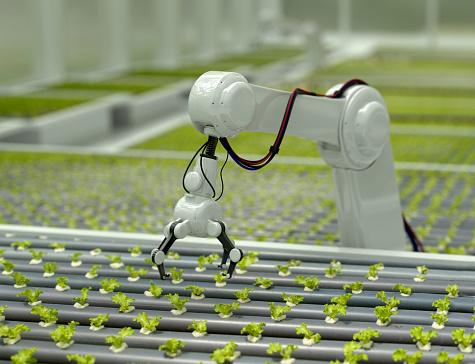 Harvesting「3D Robotic arm harvesting lettuce」:スマホ壁紙(19)