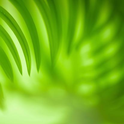 Frond「Palm leaf」:スマホ壁紙(10)