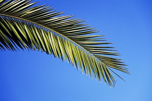 Frond「Palm Leaf」:スマホ壁紙(15)