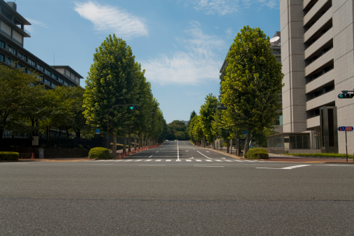 Day「Street with trees」:スマホ壁紙(11)