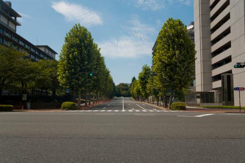 Tree「Street with trees」:スマホ壁紙(18)