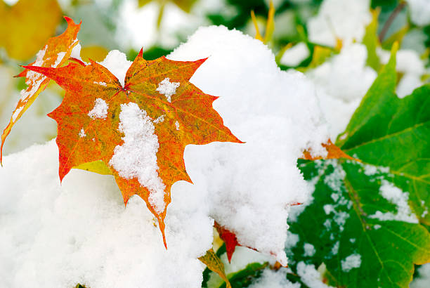 Leaves:スマホ壁紙(壁紙.com)