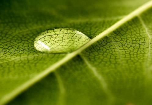 Compatibility「leaves」:スマホ壁紙(2)