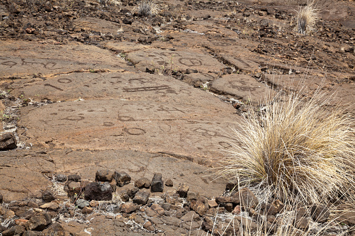 The Nature Conservancy「Petroglyphs on Kings Walking Trail」:スマホ壁紙(12)