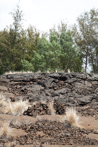 The Nature Conservancy「Petroglyphs and trees on Kings Walking Trail」:スマホ壁紙(15)