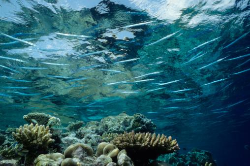Shallow「Needlenose Reef」:スマホ壁紙(18)