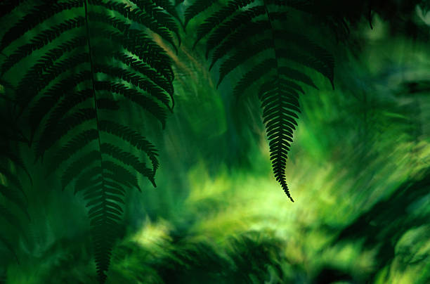 Fern (filicatae) fronds, Braulio Carrillo National Park, Costa Rica:スマホ壁紙(壁紙.com)