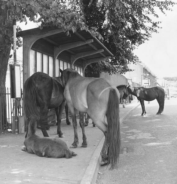 動物「New Forest Ponies」:写真・画像(6)[壁紙.com]
