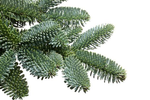 常緑樹「モミの木の枝を hang クリスマスボール」:スマホ壁紙(18)