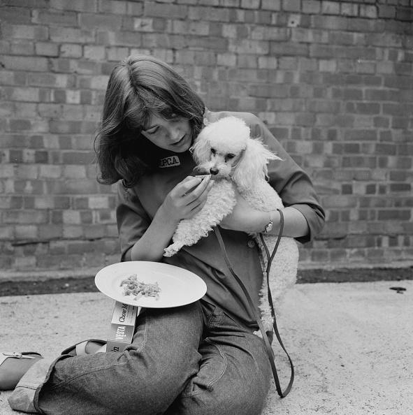 Feeding「Noodle Poodle」:写真・画像(7)[壁紙.com]