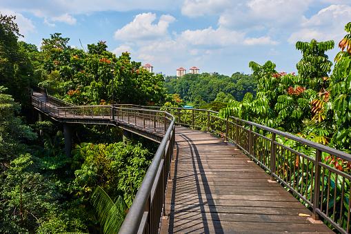 Asia「Singapore, walk on the Southern Ridges」:スマホ壁紙(9)